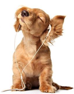 Dog Earphones.jpg
