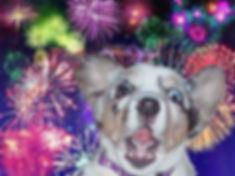 fireworks-dog-scared.jpg