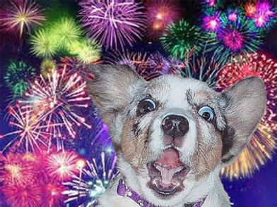fireworks-dog-scared.jpg