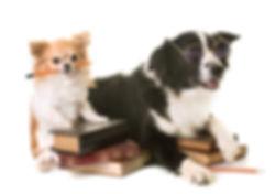 K9 Education Dog Training Beginners Class