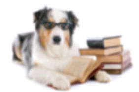 K9 Education Dog Training Collie Reading a Book
