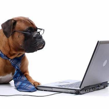 Dog-at-Computer_edited.jpg