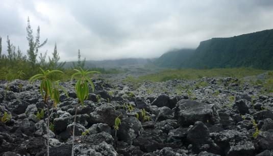 Piton de la Fournaise / La Réunion