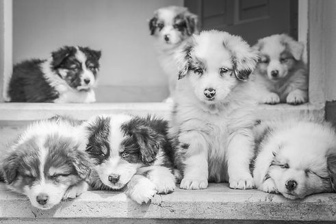 Puppies_edited.jpg