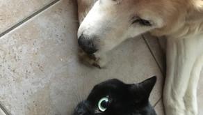 Volersi bene tra cani e gatti