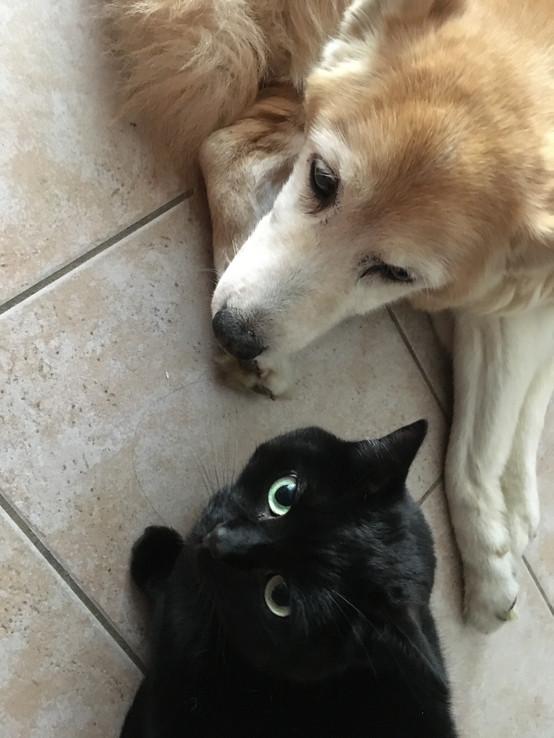 Mina e Gatto Mara