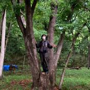 いい樹見つけた!