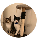 Julia témoigne pour ses 2 chats, Zion et Tina, âgés de 2 ans et 6 mois, gadé par Berny & Co' Service de garde d'animaux à votre domicile