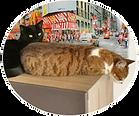 2 chats, Mistigris et Fizz, âgés de 4 ans, ont été choyé par Marlène pendant que leur Maîtresse Vanessa était en vacances
