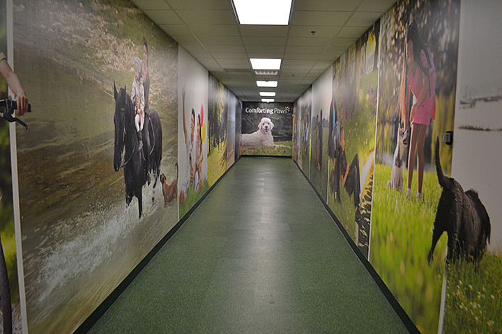 Comforting paws long hallway mural.JPG