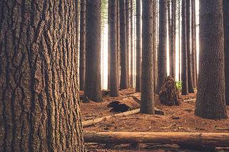 houten trappen bos.jpg