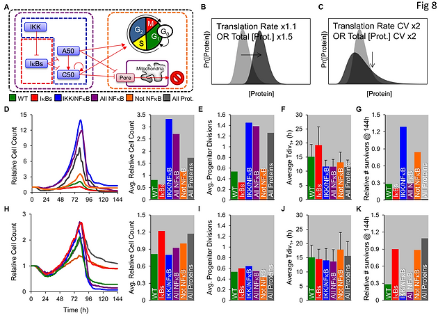 A multi-scale pharmaco-kinetic model of the B cell immune