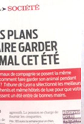 Bons plans pour faire garder son chien ou chat cet été à Lyon