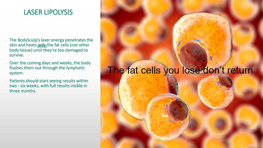 Body sculpt info website fat cells #2.pn