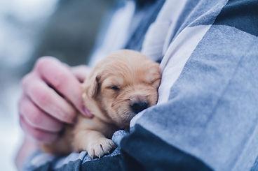 safe-animaux-vegan-cruelty-free