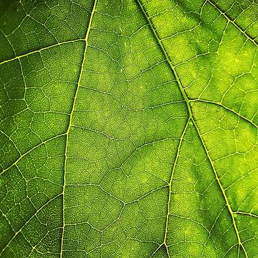 produit-naturel-efficace-ecologique