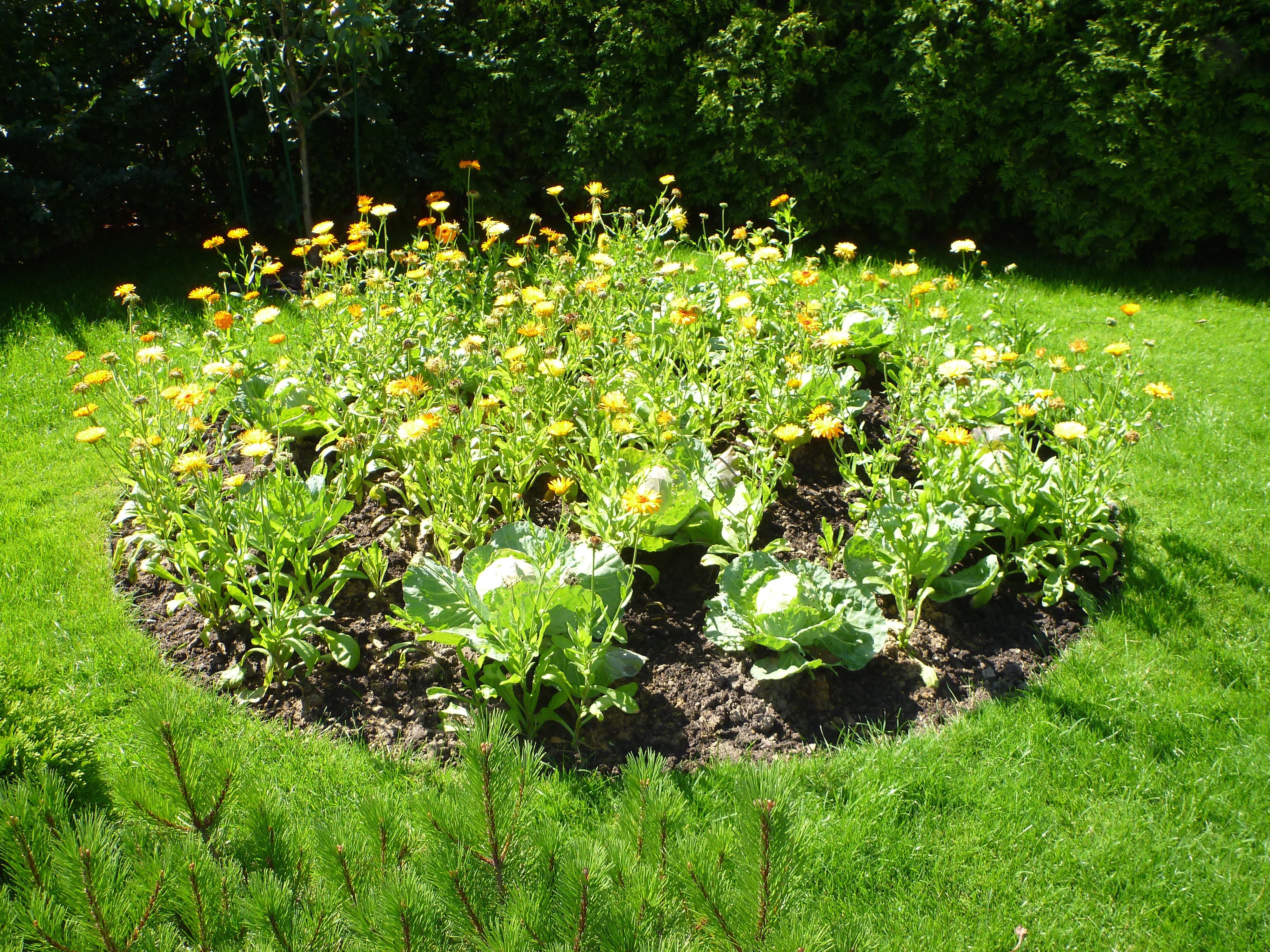 торф почвогрунт растительный грунт для грядок