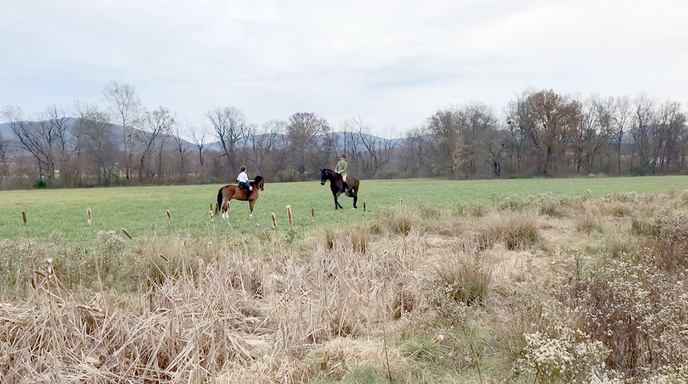 BBlaze - Grandfather and Billy in the Long Meadow