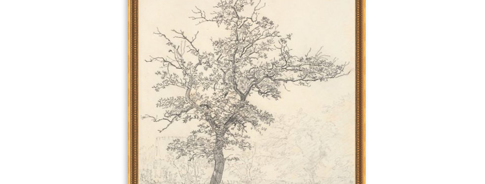 SKETCHED TREE