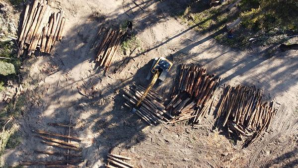 Log Dump 5.jpg