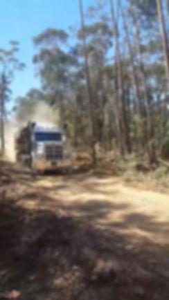 Logging truck removing trees from Bucken