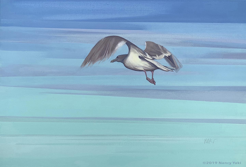 Seagull - Aleutians