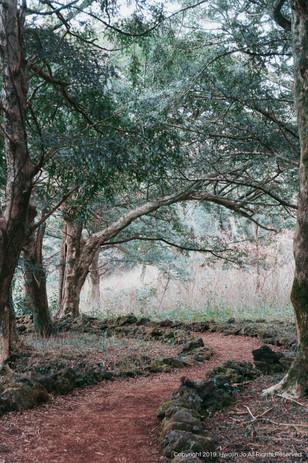 Jeju Forest