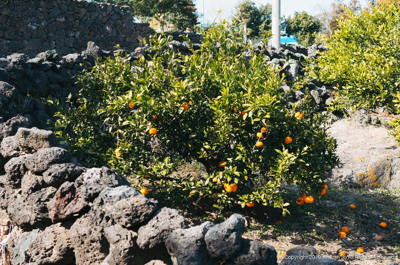 Tangerines x Black Stones