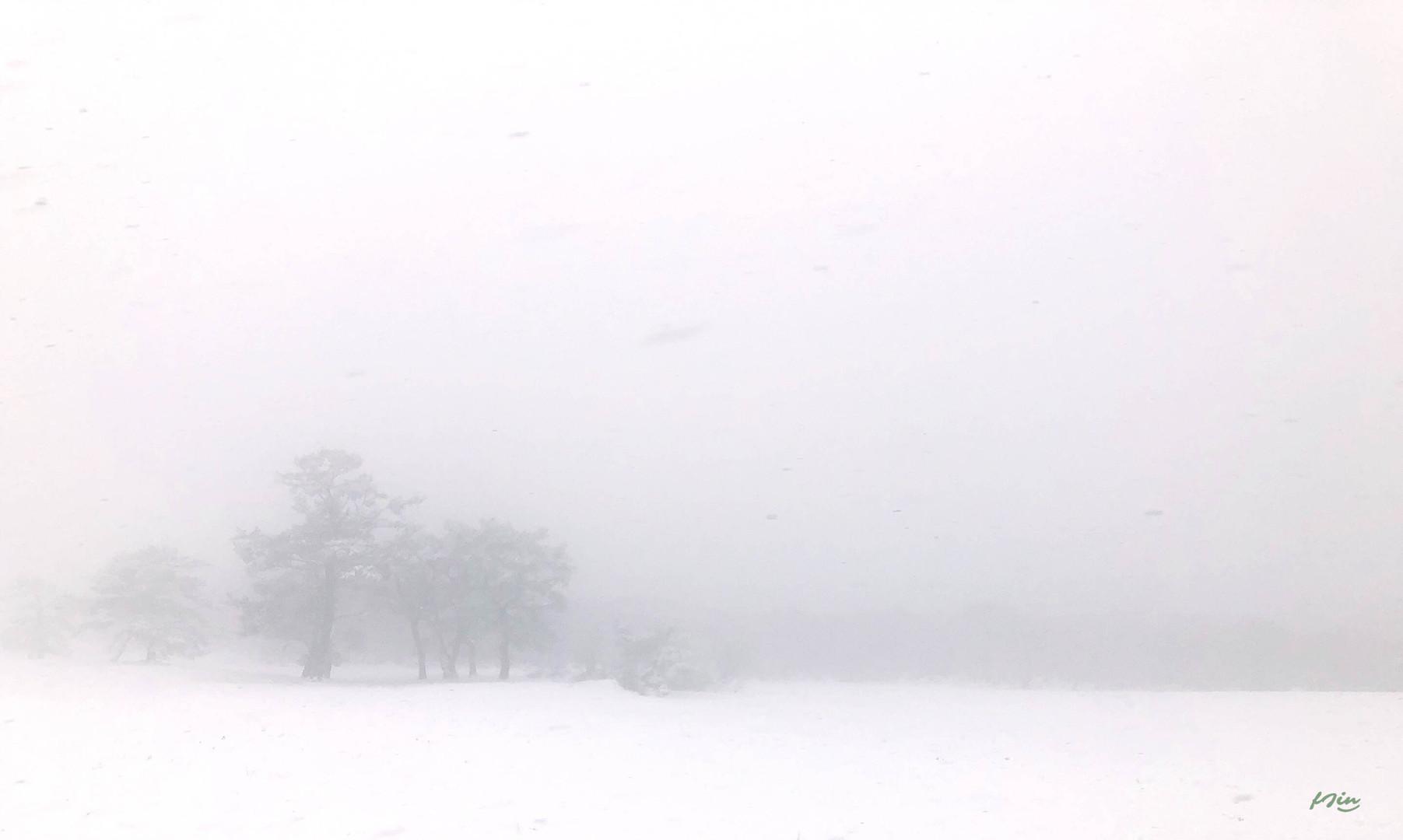 SnowyJeju1.jpg