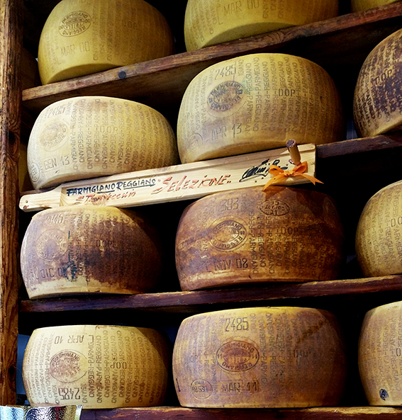 Kosher Cheese Wheels ageing, Tuscany
