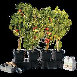 NEW-Quadgrow-plant.png