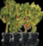 Quadgrow-planter.png