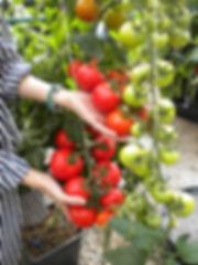 Bumper harvest 01.jpg
