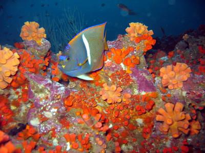 Colombia país submarino