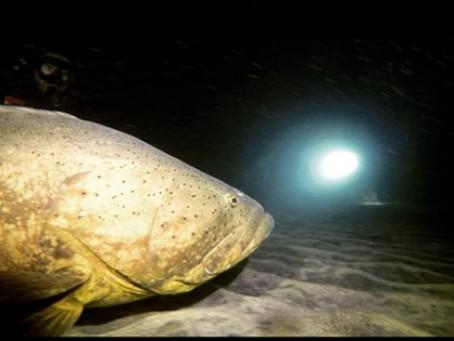 Conociendo un poco sobre los grandes peces del arrecife!!