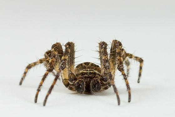 22-05-2017 - 0811 - Spider.jpg