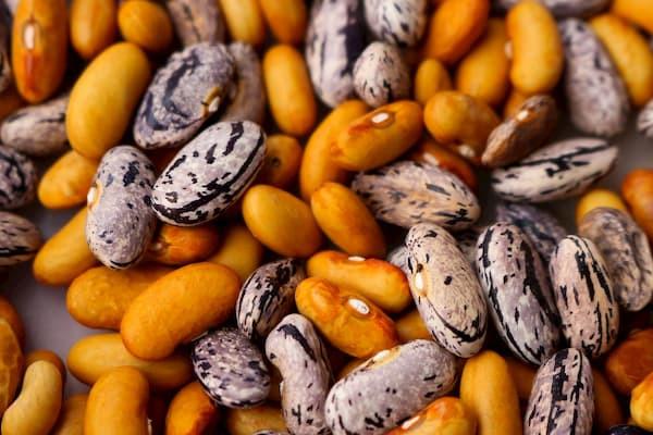 fasole, źródło białka