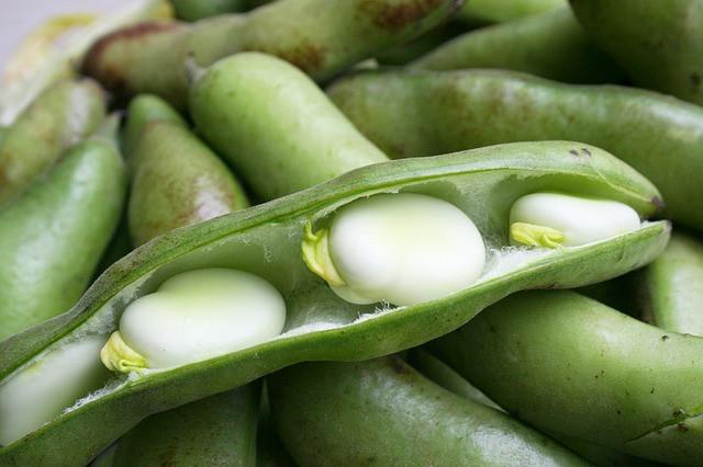 rośliny strączkowe, roślinne źródło białka