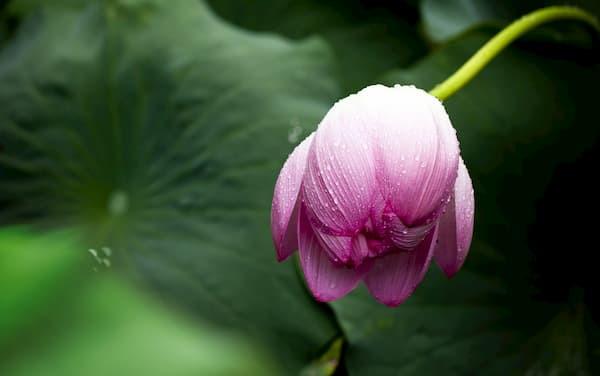 Co robić z natłokiem myśli w czasie medytacji?