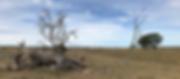 Bildschirmfoto-2020-03-10-um-11.50.45.pn