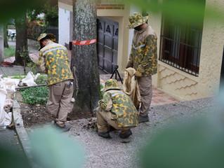 Más de 200 árboles y palmas patrimonio reciben tratamiento para su conservación