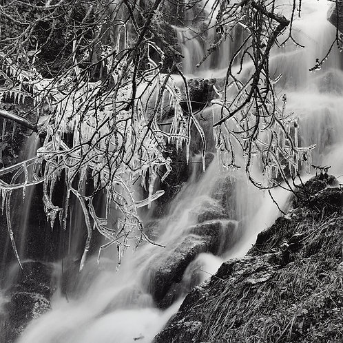 Frozen Branches and Waterfall