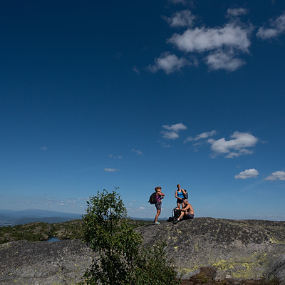 På bærtur med Galdal og Bjerk i Sauheradfjella