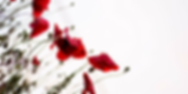 Anzac-Day-blog-banner-600x300.png