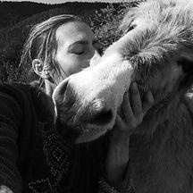les ânes de la Brasque