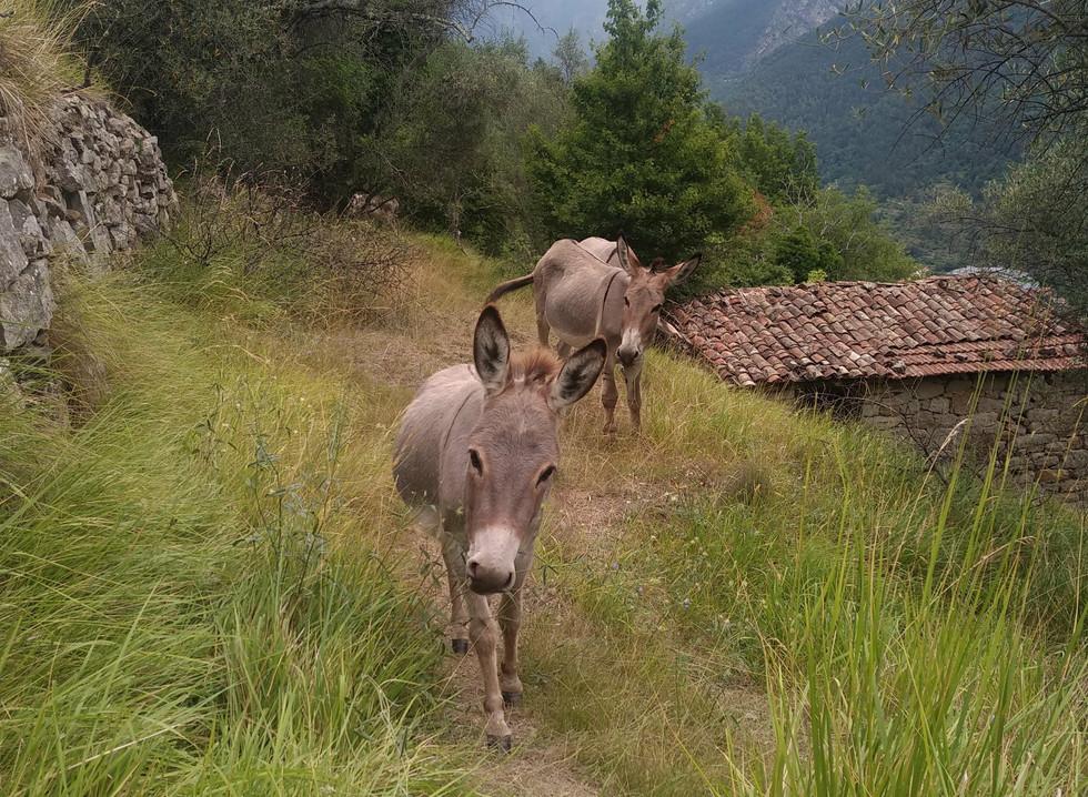 La Vilette, Gazelle