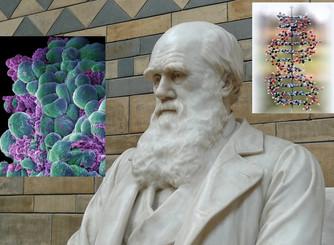 Darwinismo en el cáncer