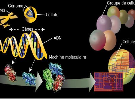 De los genes al origen genético