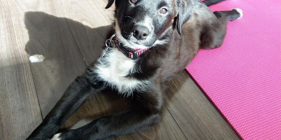 Puppy Yoga Donation Class