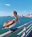 Sarasota7.jpg
